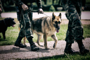 Working dog - military
